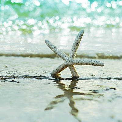 Florida House Photograph - Sea Star by Laura Fasulo