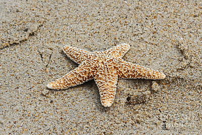 Shell Photograph - Sea Star On Sand by Cathy Lindsey