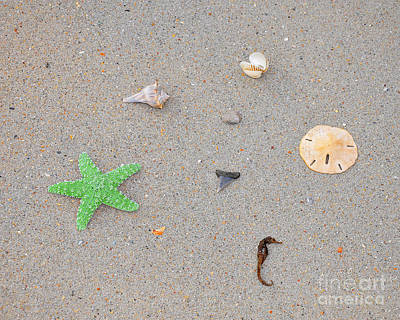 Sea Swag - Green Print by Al Powell Photography USA