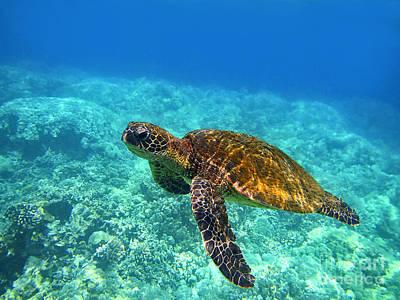 Sea Turtle Close Up Print by Bette Phelan