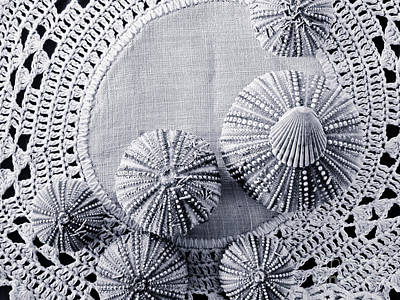 Sea Urchins On Lace Print by Colleen Kammerer