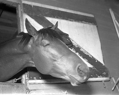 Seabiscuit Photograph - Seabiscuit Triple Crown Winner #9 by Retro Images Archive