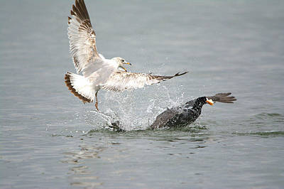 Larus Delawarensis Photograph - Seagull - Mine Mine Mine by Roy Williams