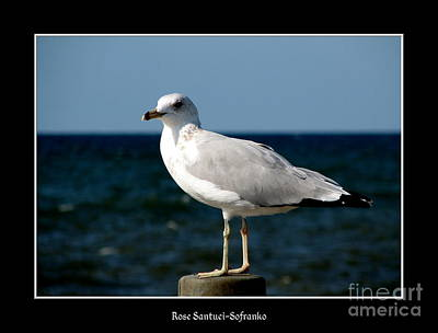 Animals Photograph - Seagull 2 by Rose Santuci-Sofranko