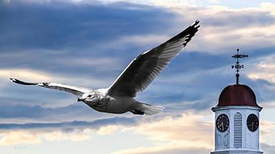 Auburn Photograph - Seagull And Clock Tower by Bob Orsillo