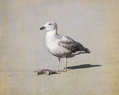 Fish Photograph - Seagull And Starfish by Priya Ghose