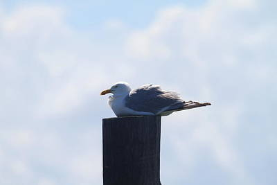 Ocean Photograph - Seagull At Oregon Inlet 2 by Cathy Lindsey