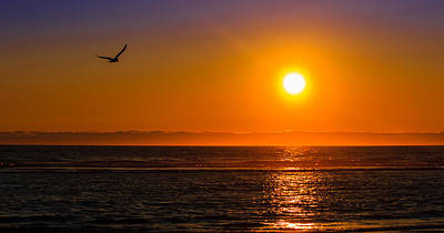 Photograph - Seagull At Sunset by C Steele