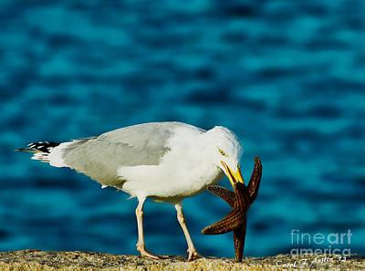 Seagull Dancing With A Star Print by Carol F Austin