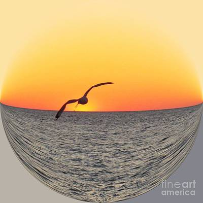 Abstract Photograph - Seagull Flying II by Scott Cameron