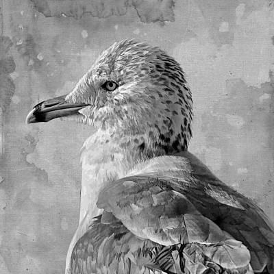 Larus Delawarensis Photograph - Seagull Portrait by HH Photography of Florida