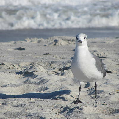 Seagull Photograph - Seagulls At Fernandina 7 by Cathy Lindsey