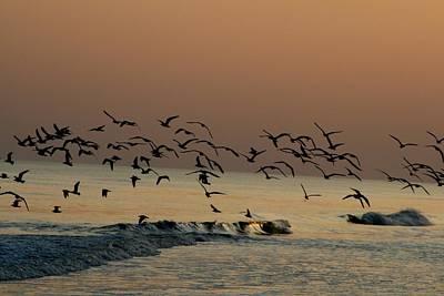 Seagulls Feeding At Dusk Print by Beth Andersen