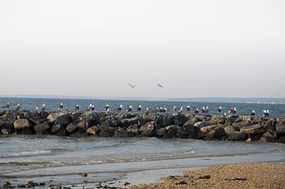 Md Digital Art - Seagulls On A Jetti by Bill Cannon