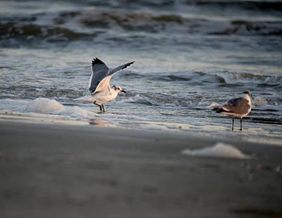 Seagulls Print by Sandra Silva