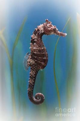 Seahorse Photograph - Seahorse - Digital Painting by Carol Groenen