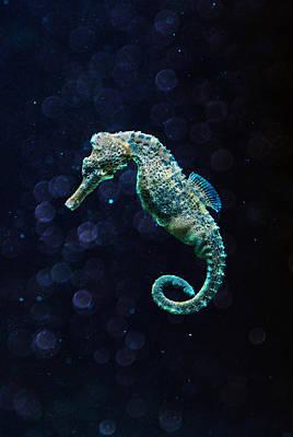Seahorse Photograph - Seahorse by Jaroslaw Blaminsky
