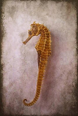 Seahorse Still Life Print by Garry Gay