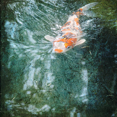 Goldfish Digital Art - Searching by Sally Banfill