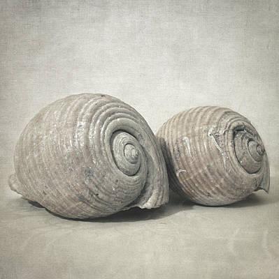 Kitchen Photograph - Seashell No.3 by Taylan Soyturk