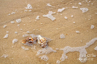 Seashells And Bubbles Print by Kaye Menner