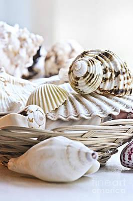 Basket Photograph - Seashells by Elena Elisseeva