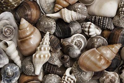 Seashells On The Beach Print by Carol Leigh