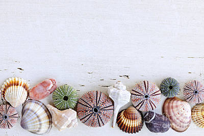 Seashells On Wood Background Print by Elena Elisseeva