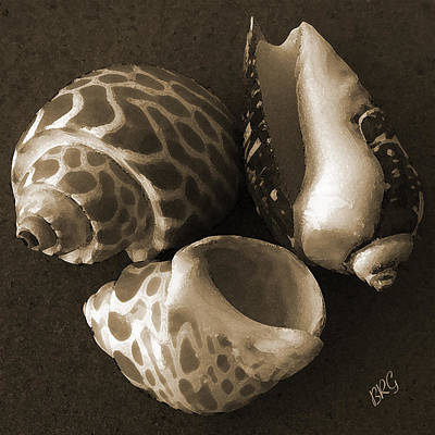 Seashells Spectacular No 1 Print by Ben and Raisa Gertsberg