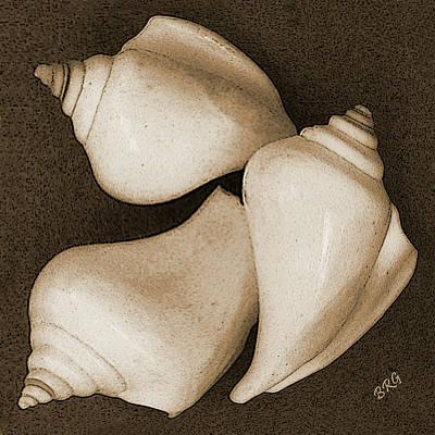 Seashells Spectacular No 4 Print by Ben and Raisa Gertsberg
