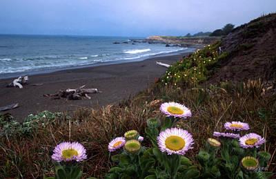 Moonstone Photograph - Seaside Daisies On Moonstone Beach by Kathy Yates