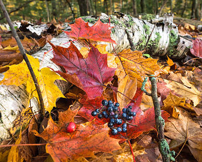 Forest Floor Photograph - Season Finale  by Bill Pevlor