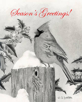 Cardinal Drawing - Cardinal And Holly- Season's Greetings Cards by Sarah Batalka