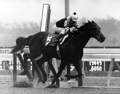 Seattle Slew Horse Racing #05 Print by Retro Images Archive