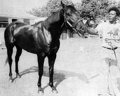Seattle Slew Horse Racing #07 Print by Retro Images Archive