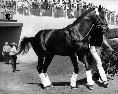 Seattle Slew Horse Racing #09 Print by Retro Images Archive