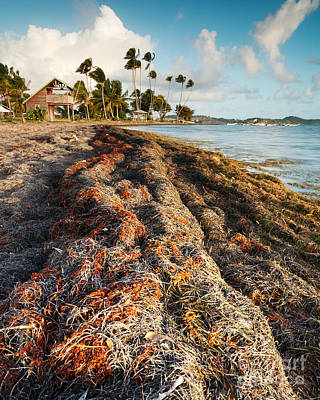 Landscape Photograph - Seaweed by Matteo Colombo
