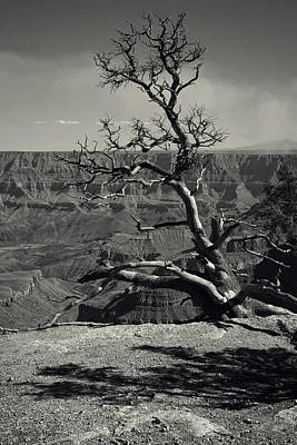 Tree Photograph - Secure I Stand by Lucinda Walter