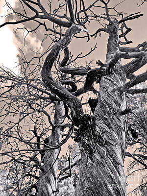 Sedona Arizona Ghost Tree In Black And White Print by Gregory Dyer