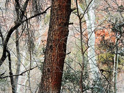 Brown White Sedona Trees Photograph - Sedona Layers by Todd Sherlock