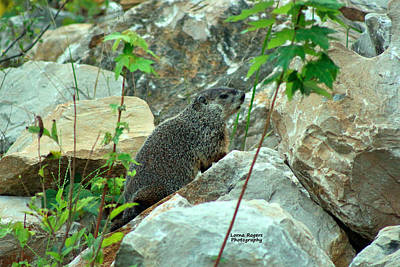Groundhog Digital Art - See Rock City by Lorna Rogers Photography