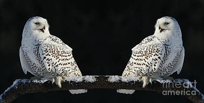 Seeing Double- Snowy Owl At Twilight Print by Inspired Nature Photography Fine Art Photography