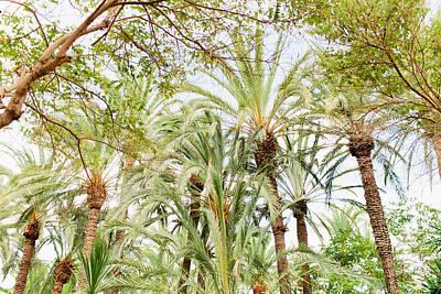 Spanish Landscape Photograph - Segovia Palms by Ariane Moshayedi