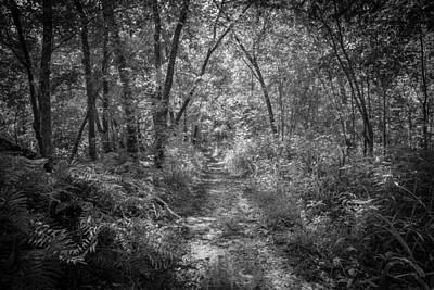 Cypress Swamp Photograph - Seminole County Florida Environmental Center Along The Florida Trail Bw    by Rich Franco