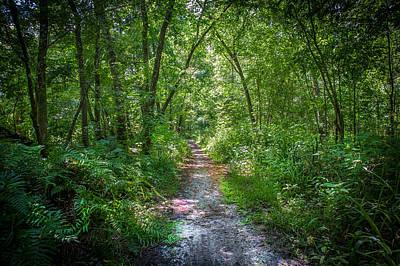 Cypress Swamp Photograph - Seminole County Florida Environmental Center Along The Florida Trail  by Rich Franco