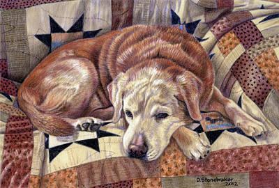 Red Foxes Drawing - Senior Siesta by Debbie Stonebraker