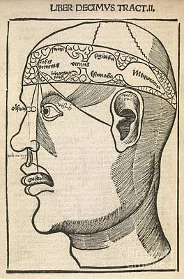 Senses Within The Brain, 16th Century Print by Middle Temple Library