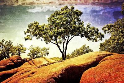Sentinal Tree Print by Marty Koch