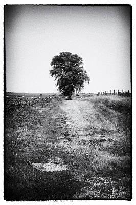 Contemplative Photograph - Sentinel by Christi Kraft