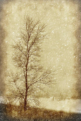 Sentinel Tree In Winter Print by Nikolyn McDonald